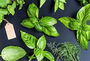 Βότανα που καταπολεμούν τον ιό της γρίπης
